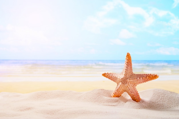 Starfish on summer sunny beach at ocean background travel, vacation
