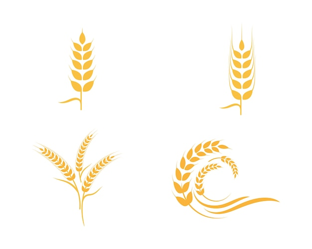Agriculture wheat Logo Template Vector Premium Download - wheat template