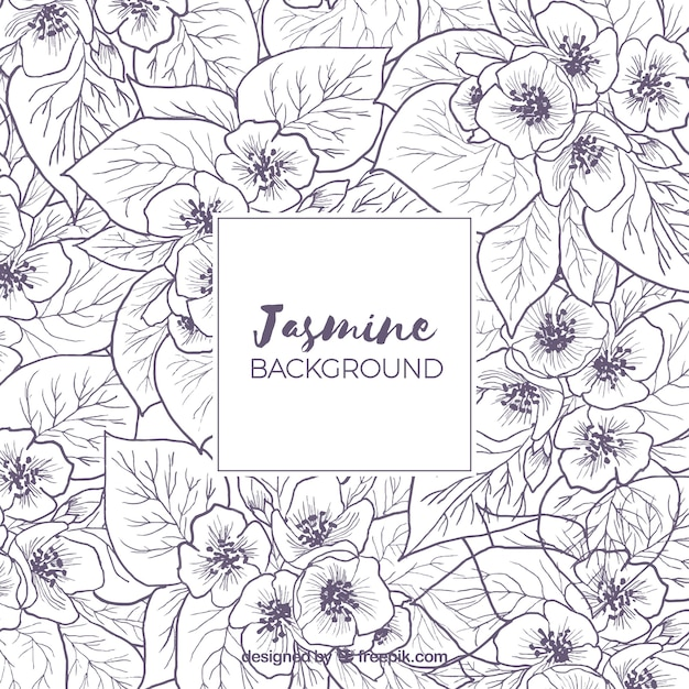 Background with sketches of jasmine Vector Free Download - background sketches