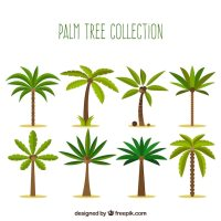 Collection of palm trees in flat design Vector | Free Download