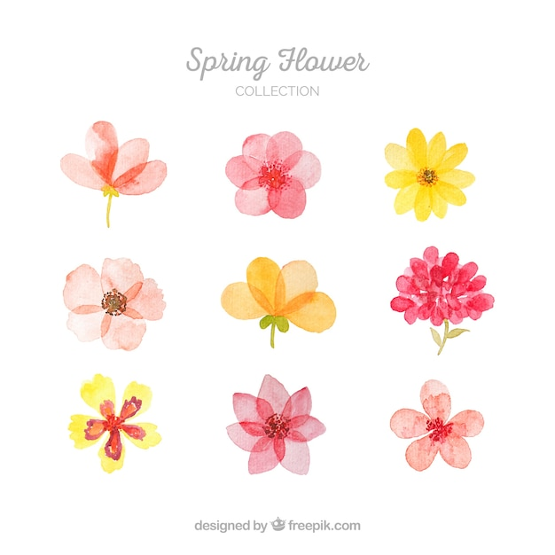 Collection of spring flowers Vector Free Download - photo of spring