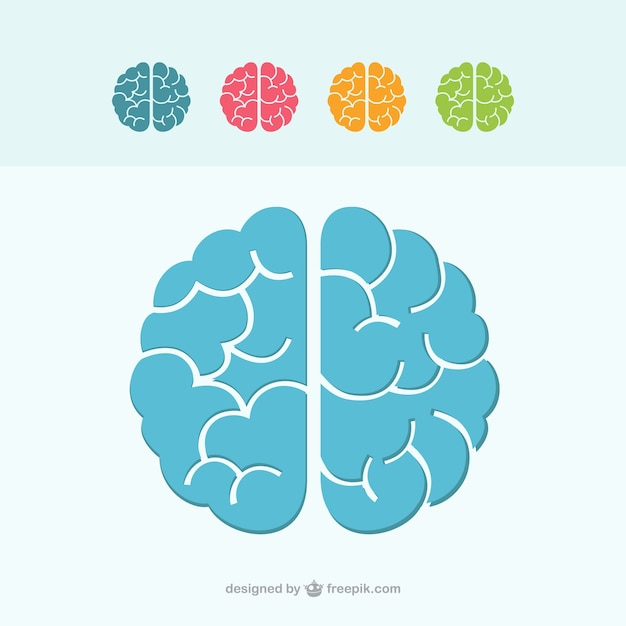 Colorful brain icons Vector Free Download
