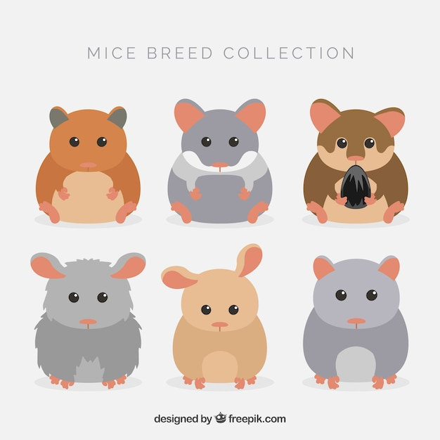 Cute mice breed pack Vector Free Download