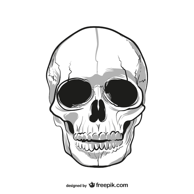 Human skull drawing Vector Free Download