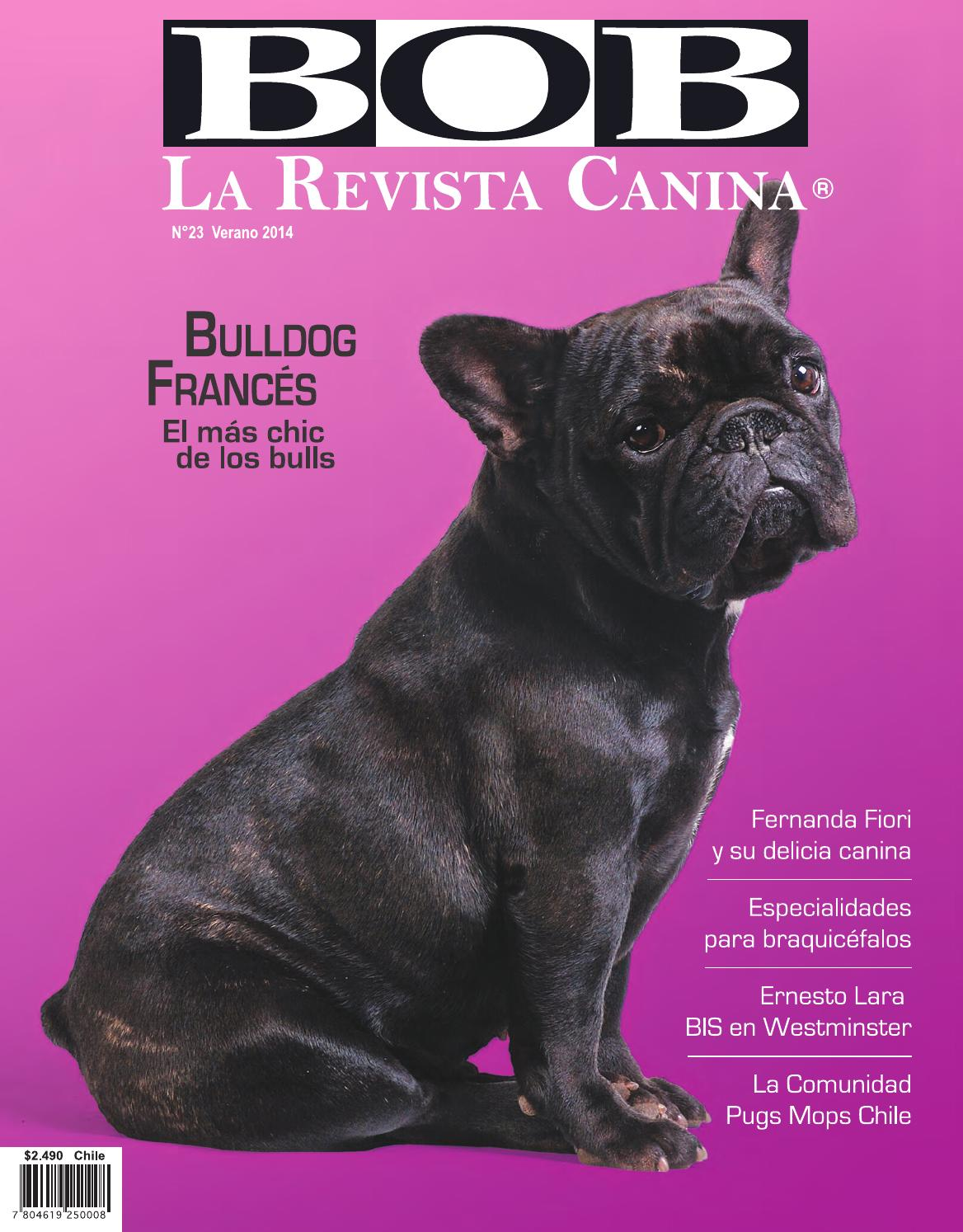 Libro Bulldog Frances Bob23 By Carolina Bustos Issuu