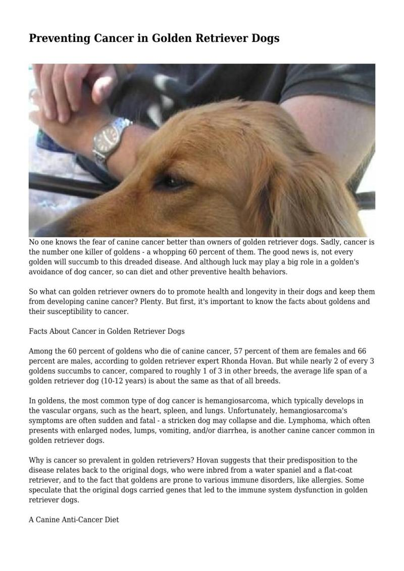 Large Of Golden Retriever Facts