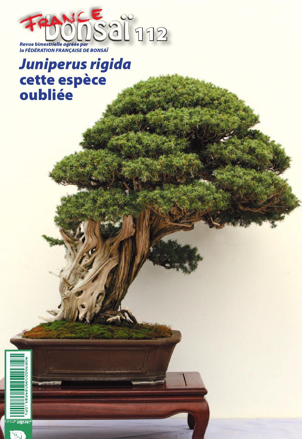 Bonsai D Interieur Especes France Bonsaï 112 By Jardin Press Issuu