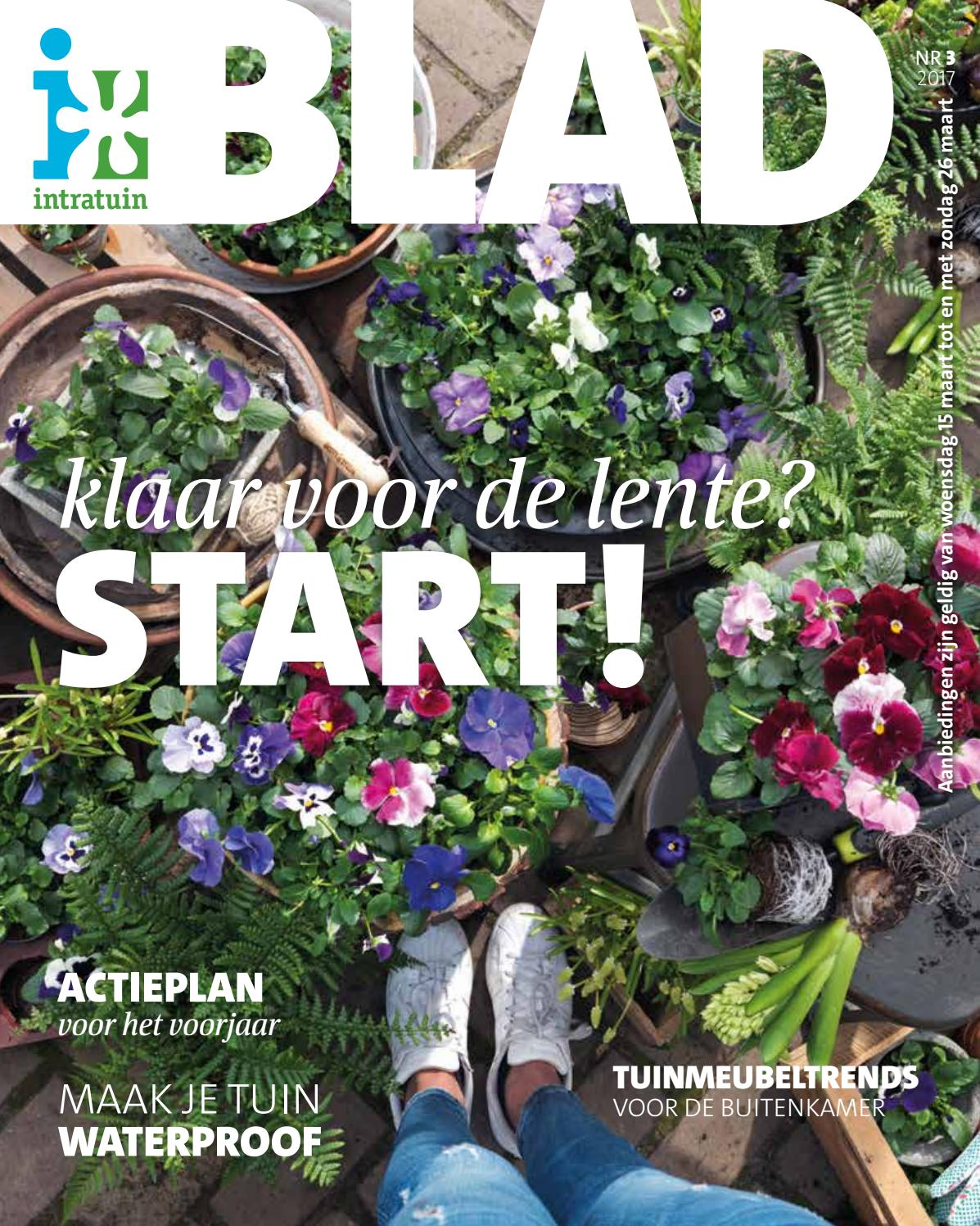 Hedera Schutting Intratuin Intratuin Nl 15 03 Tot 26 03 By Profacts Issuu