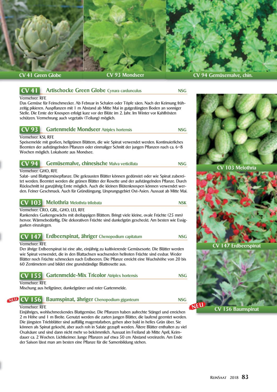 Erdbeere Vegetative Vermehrung Reinsaat Katalog 2018 By Reinsaat Issuu