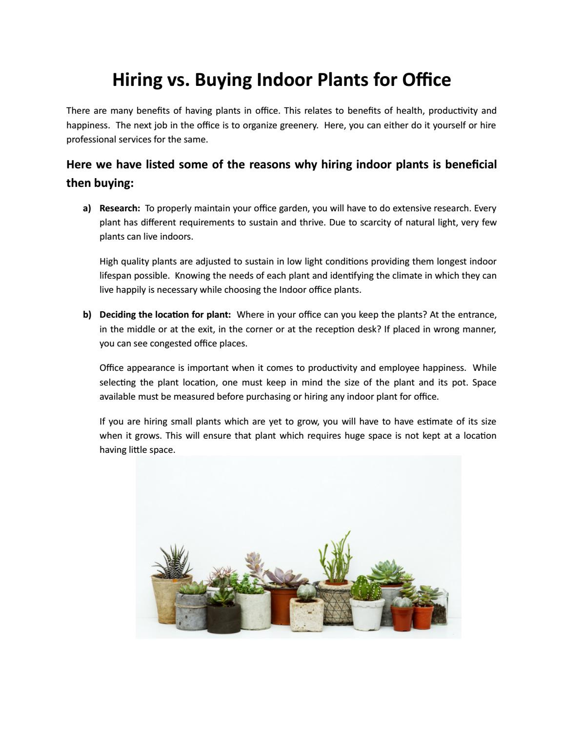 Indoor Plants For The Office Hire Vs Buying Indoor Plant For Office Foliage Indoor Plant Hire