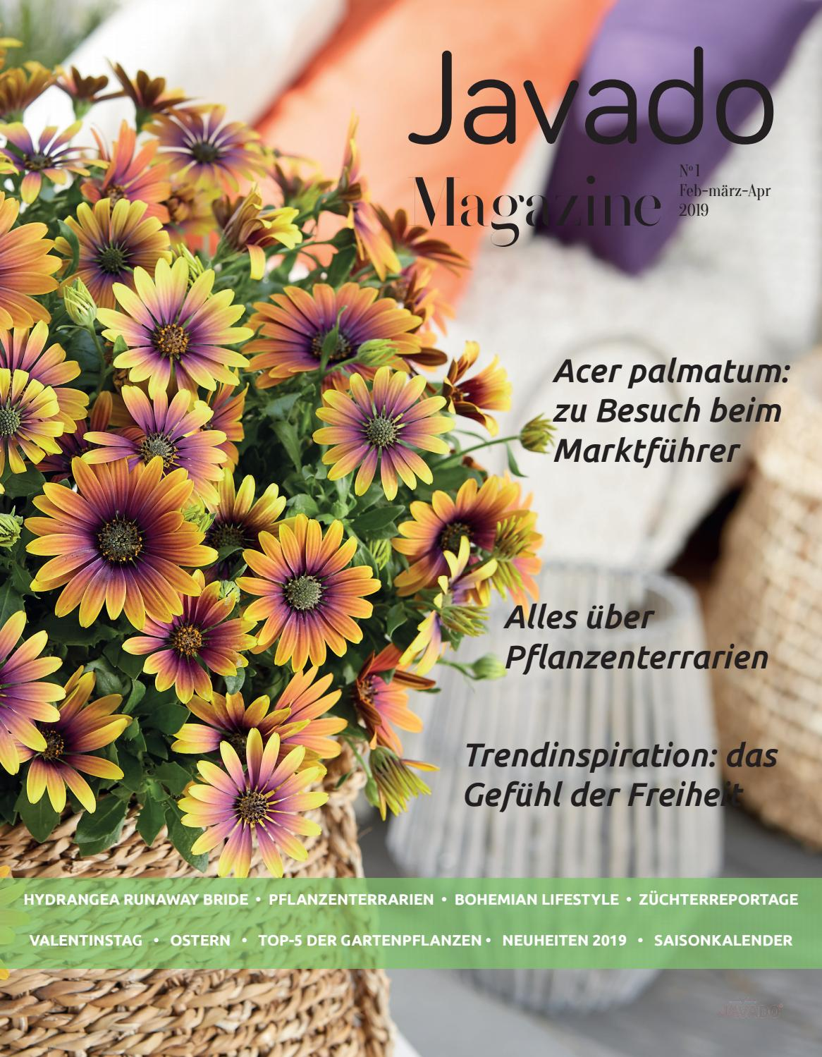 Gartenpflanzen Neuheiten Javado Magazine 1 Deutsch By Wbegroup Issuu