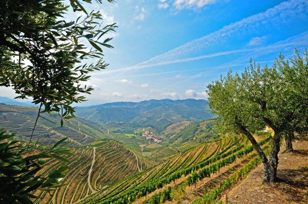 Douro Valley vineyard Portugal - Best Wine Destinations in Europe