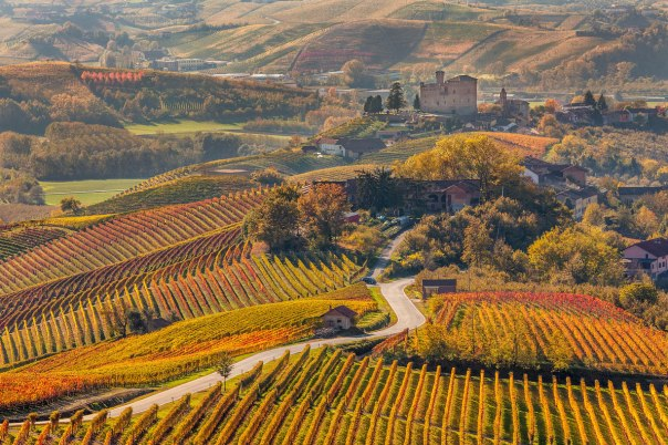 Piedmont vinyards Italy - Best wine destinations in Europe