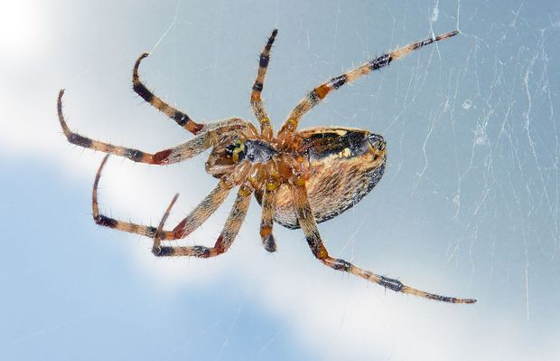 22 of the spiders you might find in Michigan (and one you likely won