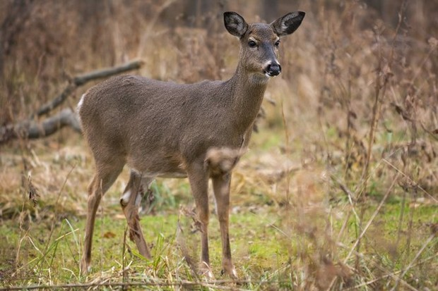 Hd Niagara Falls Wallpaper Experts Reasons Why Upstate Ny Deer Hunting Is Off To A