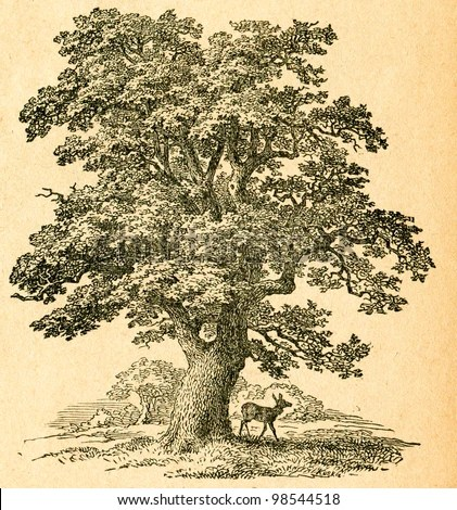 Makalah Tentang Ikan Mas Makalah Budidaya Ikan Nila Pusat Makalah Oak Tree Old Illustration By Unknown Artist From Botanika Szkolna Na