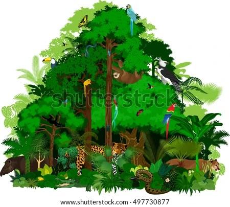 Amazon Rainforest Animals Wallpaper Download Animals Amazon Wallpaper 1920x1080 Wallpoper