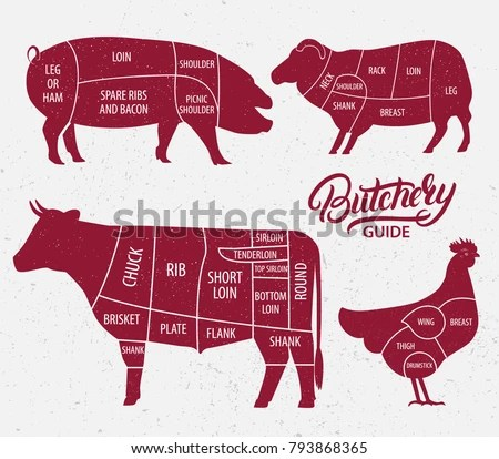 Vintage Butcher Cuts Of Veal Or Beef Diagram Vector - Download Free