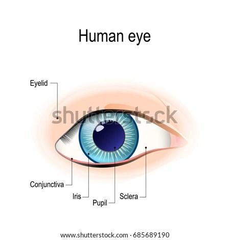 External Eye Diagram - 8euoonaednewtradinginfo \u2022