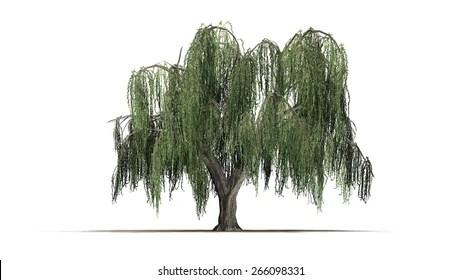 weeping willow tree Images, Stock Photos  Vectors Shutterstock
