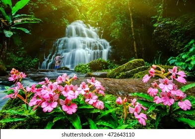 Fall Waterfall Wallpaper Waterfall Flowers Images Stock Photos Amp Vectors