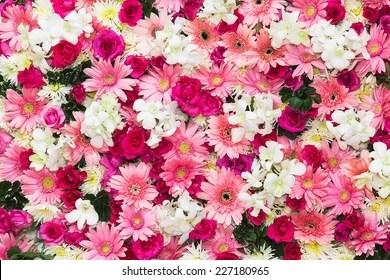 Falling Rose Petals Wallpaper Flowers Background Images Stock Photos Amp Vectors