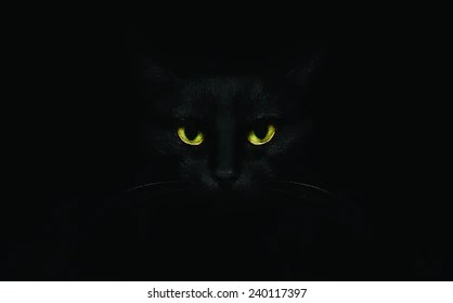 Black Cat Eyes Wallpaper Black Cat Images Stock Photos Amp Vectors Shutterstock