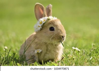 Black And White Floral Wallpaper Bunny Images Stock Photos Amp Vectors Shutterstock