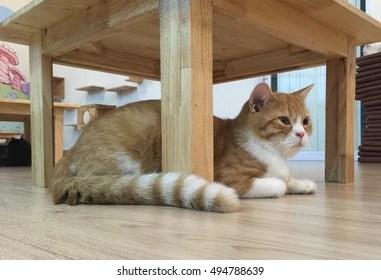 Cat Under Table Images Stock Photos Vectors Shutterstock