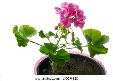 Plant Reproduction Images Stock Photos Vectors