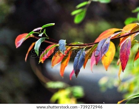 Colorful Nature Stock Photo (Edit Now) 739272946 - Shutterstock