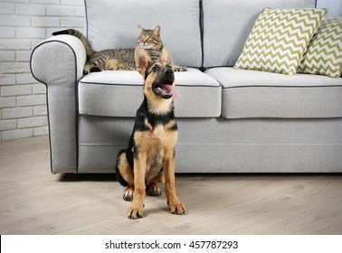 Cat On Couch Images, Stock Photos & Vectors