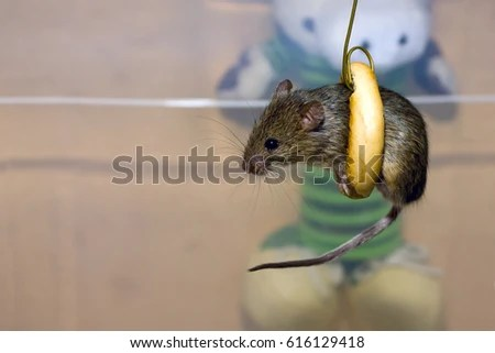 Cute Mice Sits Inside Bagel Stock Photo (Edit Now) 616129418