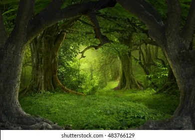 3d Tunnel Wallpaper Forest Background Images Stock Photos Amp Vectors