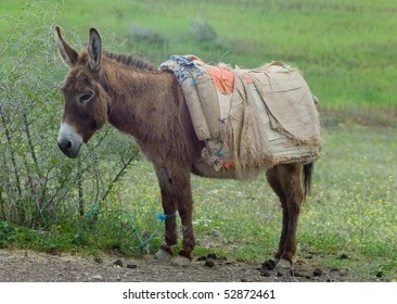 Donkey Cart Images Stock Photos Vectors Shutterstock