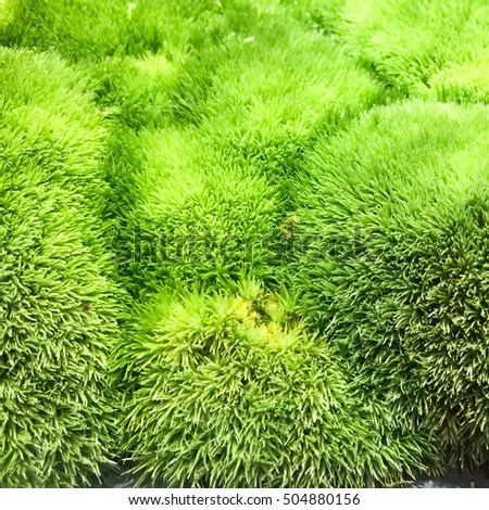 Green Texture Stock Photo (Edit Now) 504880156 - Shutterstock