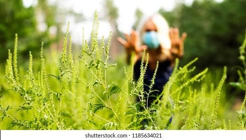 ragweed Images, Stock Photos  Vectors Shutterstock