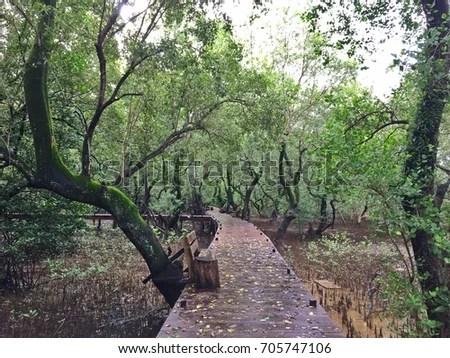 Path Way Bridge Made Wood Plank Stock Photo (Edit Now) 705747106