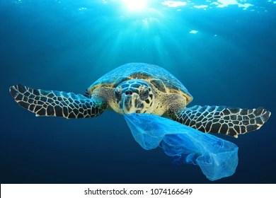 Green Animal Wallpaper Turtle Images Stock Photos Amp Vectors Shutterstock