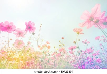 Pastel Flower Background Images Stock Photos Amp Vectors
