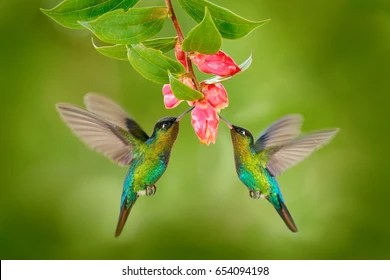 Hummingbird Images Stock Photos Vectors Shutterstock