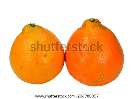 Two Mineola Tangelo Honey Bell Oranges Stock Photo (Edit Now