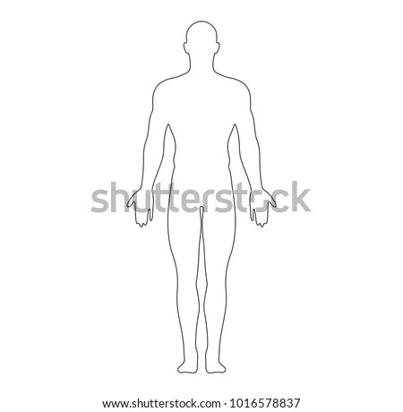 Anatomical Position Anterior View Male Body Stock Vector (Royalty