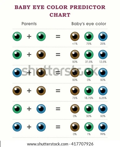 Baby Eye Color Predictor Chart Template Stock Vector (Royalty Free