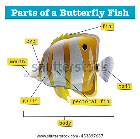 Diagram Different Parts Fish Illustration Stock Vector (Royalty Free