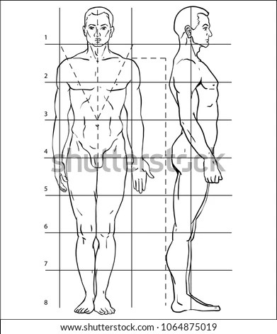 Diagram Human Body How Draw Person Stock Vector (Royalty Free