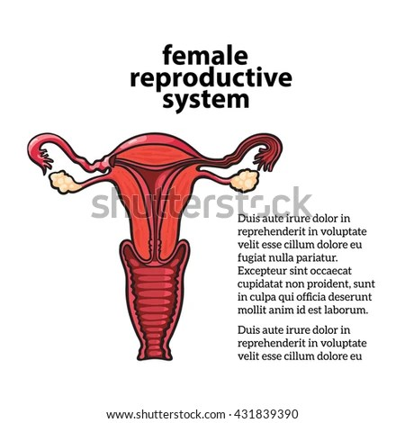 Female Reproductive System Vector Sketch Handdrawn Stock Vector