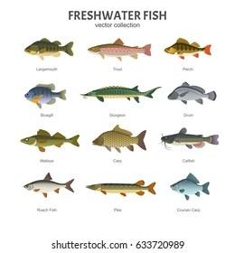 Marine Aquarium Deluxe Screensaver Aquarium Fish Types Names