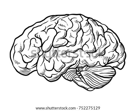 Hand Drawn Brain Vector Stock Vector (Royalty Free) 752275129