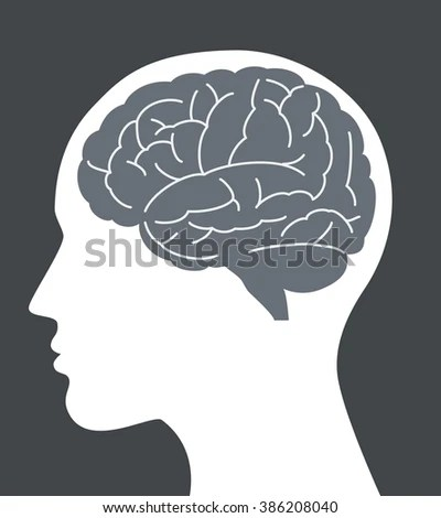 Human Brain Vector Illustration Face Profile Stock Vector (Royalty